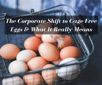 The Corporate Shift to Cage-Free Eggs & What It Really Means
