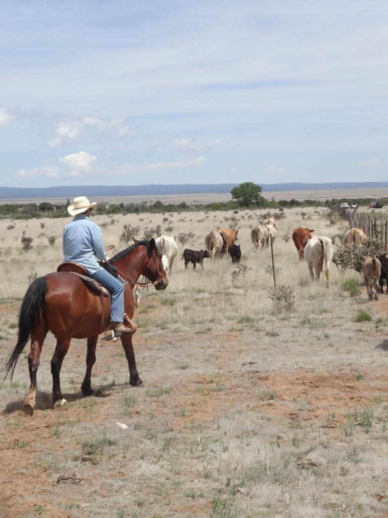 Know Your Farmer: Joan Bybee of Mesteño Draw Ranch