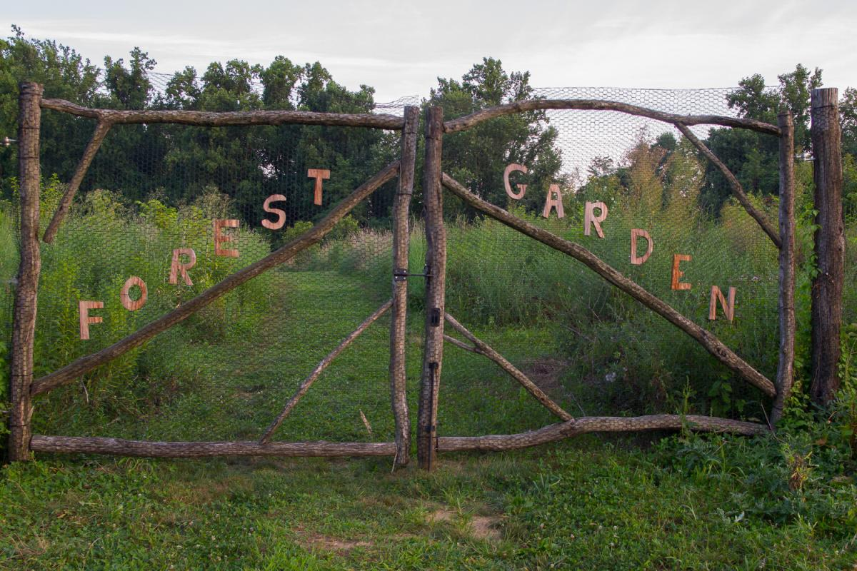 Know Your Farmer: Lincoln Smith of Forested, a Research Forest Garden
