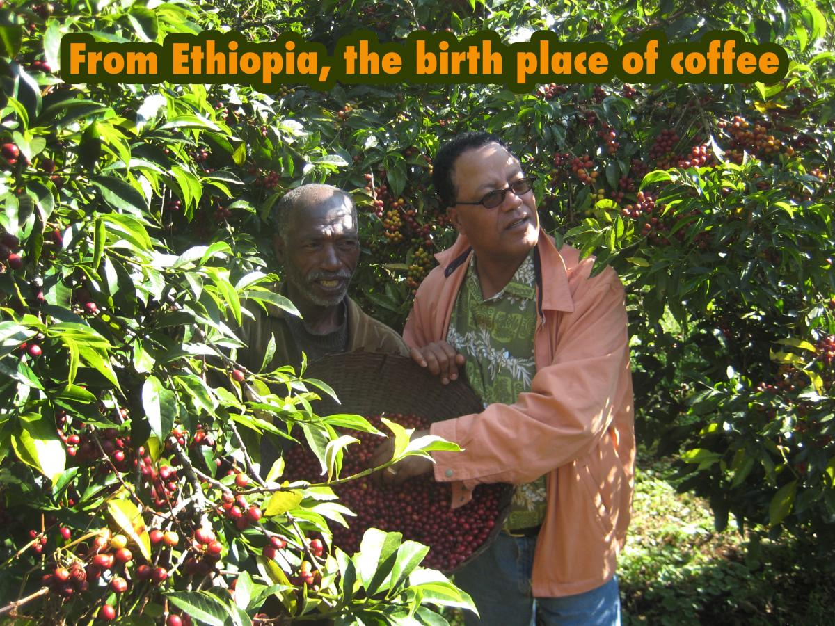 Organic Single Origin Ultra Premium Coffee from Ethiopia