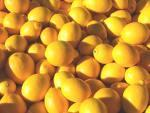 Organic Meyer Lemons. Multiple product options available: 2