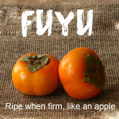 U-Pick Persimmons (NO Shipping or Delivery Available!)