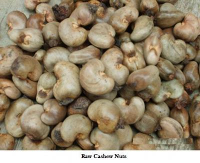 Raw Dried Cashew nut
