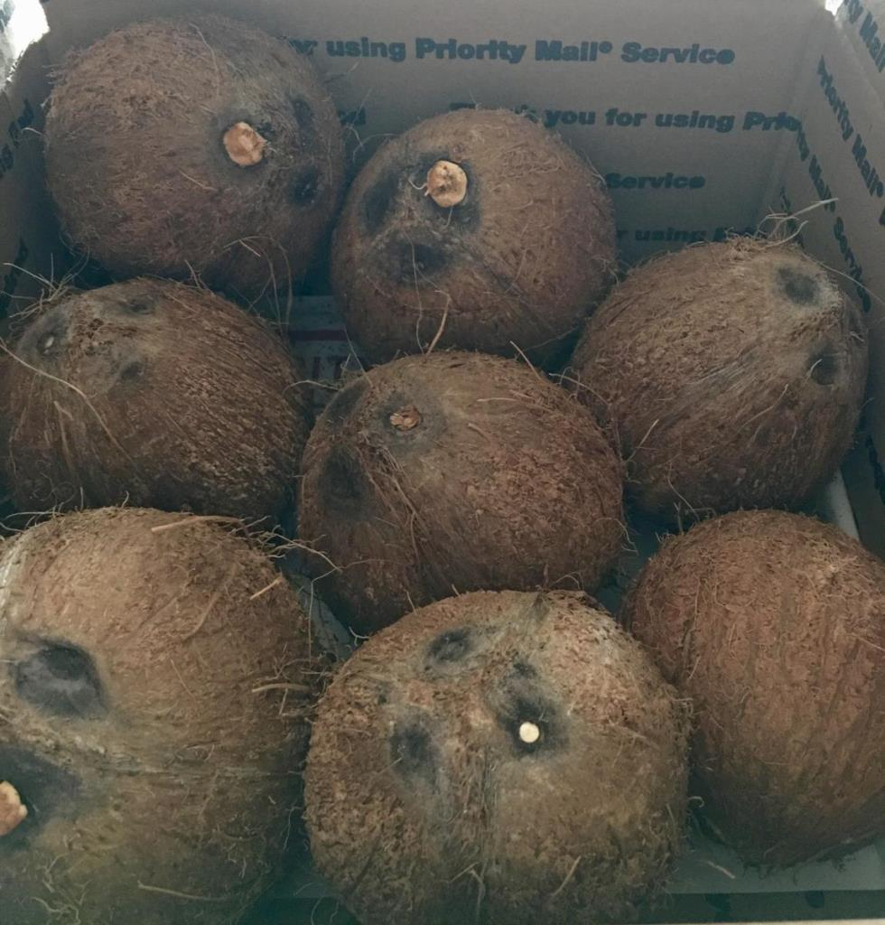 Coconuts Fresh Organic ~ Picked packed and shipped direct to U