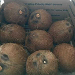 Coconuts Farm Fresh Organic ~ Picked packed & shipped direct to U