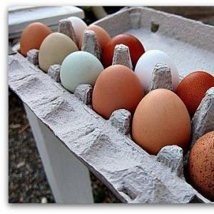 Pastured Chicken Eggs. Multiple product options available: 3