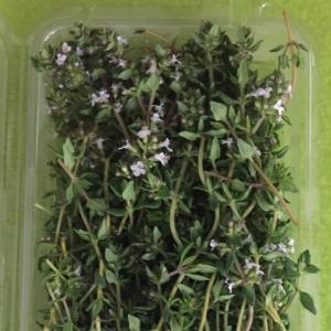 Thyme. Multiple product options available: 2