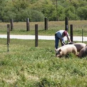Pastured Pork - Wholesale. Multiple product options available: 6