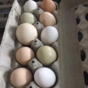 Fresh pastured chicken eggs. Multiple product options available: 2