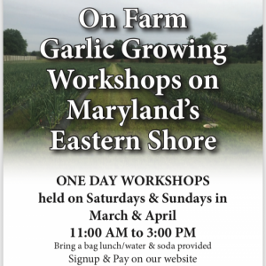 Garlic Growing WorkShops. Multiple product options available: 2