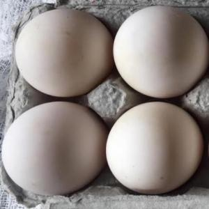 Local, free-range, GMO- and soy-free duck eggs