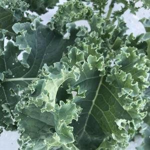 Produce- Kale. Multiple product options available: 3
