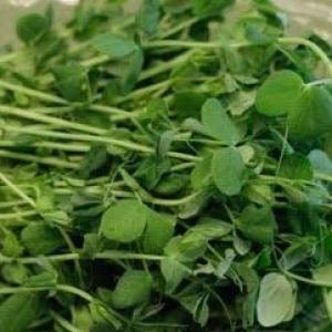 Microgreens: Pea – Speckled