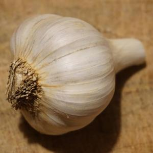 garlic. Multiple product options available: 2