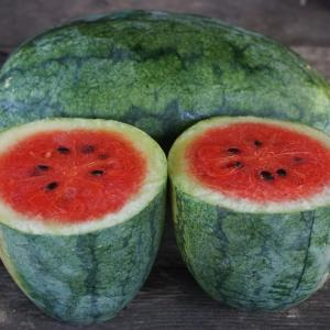 watermelon - seeded red