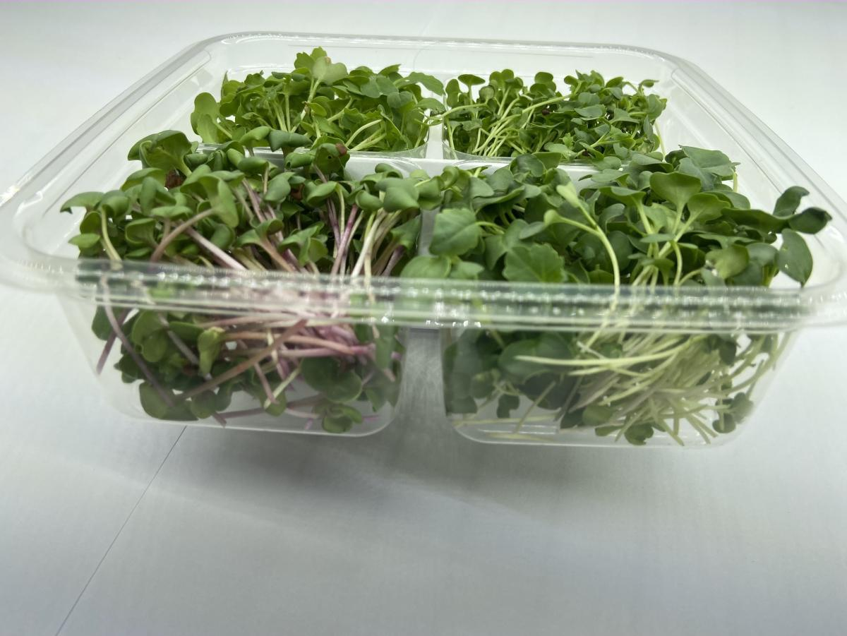 Microgreen - Quad Pack - Growers Choice