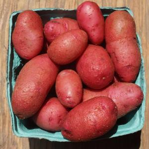 potatoes - red thumb. Multiple product options available: 2