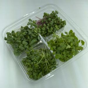 Microgreen - Quad Pack - Growers Choice - PREORDER